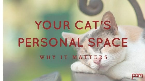 Your cat's personal space: why it matters