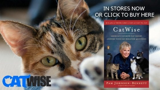 CatWise: in stores now or click to buy here
