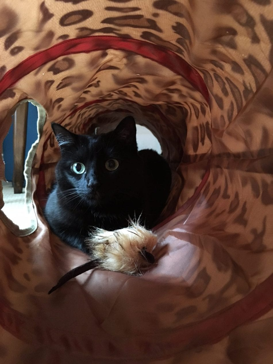 black cat playing with toy