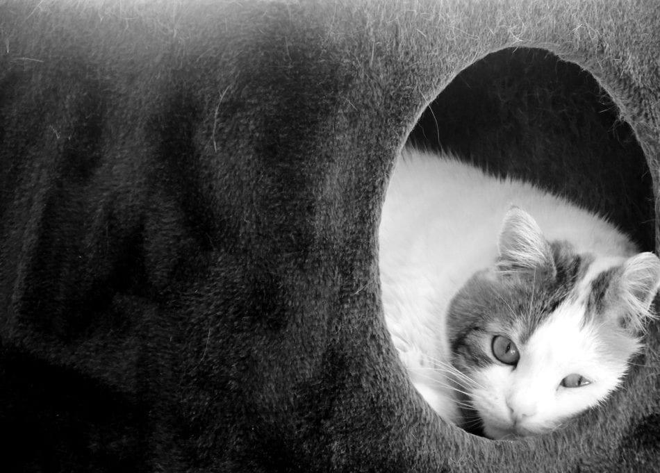 cat in fuzzy tunnel