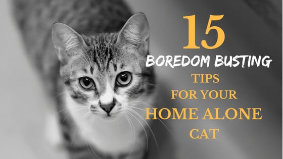 15 boredom busting tips for your home alone cat