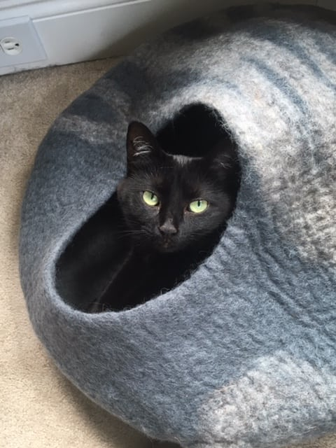 black cat in gray covered bed