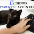 15 things cat parents have in common