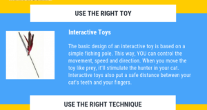 interactive playtime quick tips